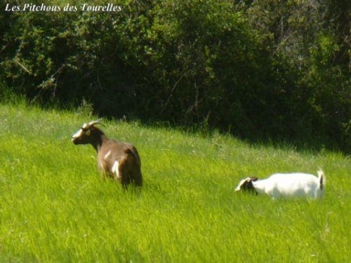 Nine et Léa dans l'herbe