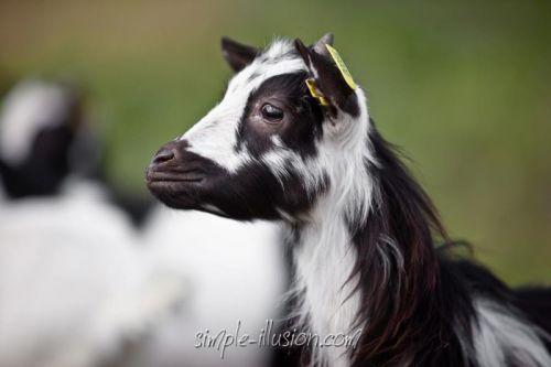 Portrait de profil de FLORIA