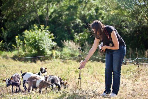 Une des photographes aux côtés de nos minuscules chèvres alsaciennes !