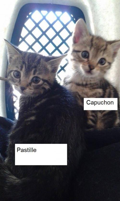 capuchon.jpg