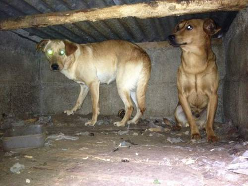 chiens en danger2.jpg