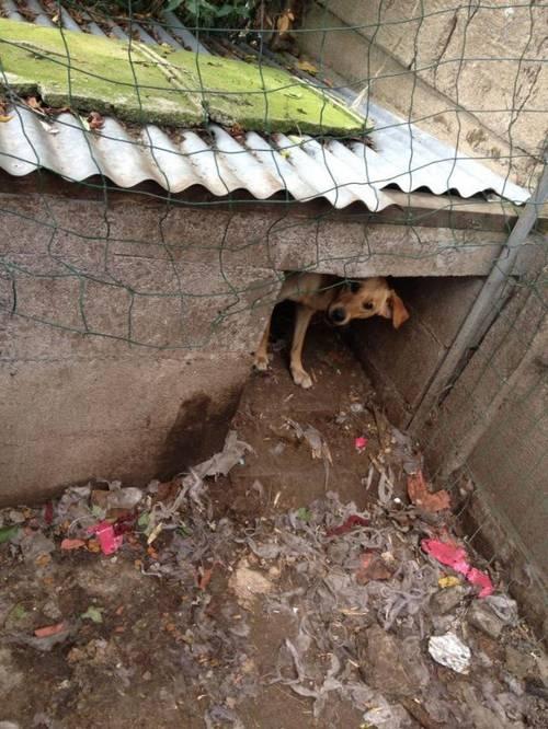 chiens en danger4.jpg