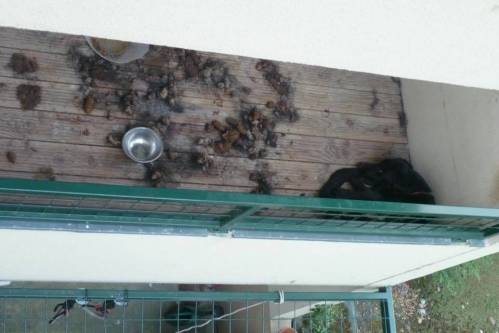 chien balcon.jpg