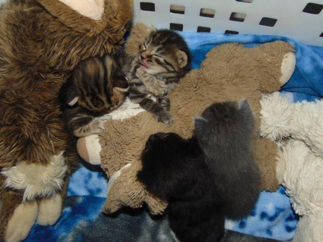 4 chatons a trelazé2.jpg