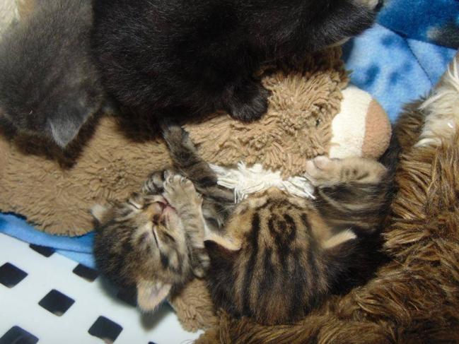4 chatons a trelazé3.jpg