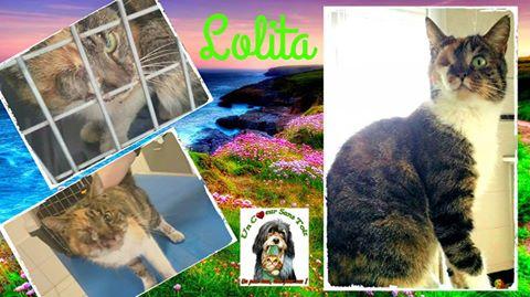 lolita3.jpg
