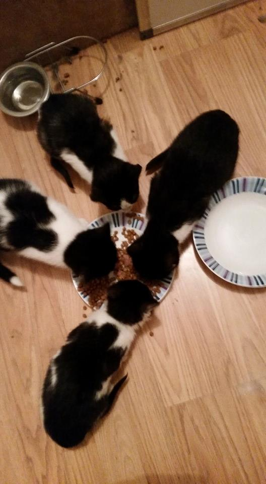 4 chatons trouvé4.jpg
