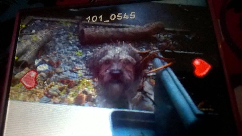 petit chien ucst1.jpg