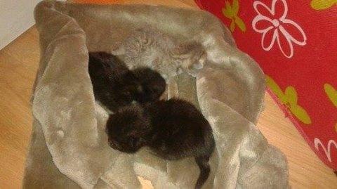 3 petits chatons.jpg