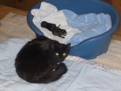 chatte et 2 bebes1.jpg