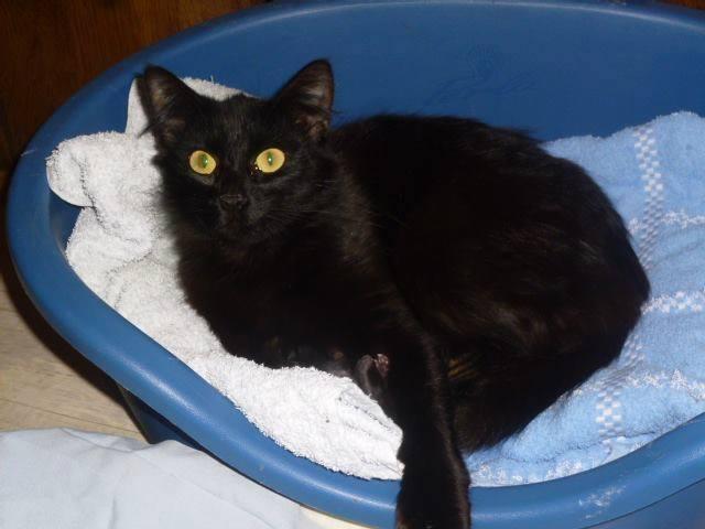 chatte et 2 bebes2.jpg