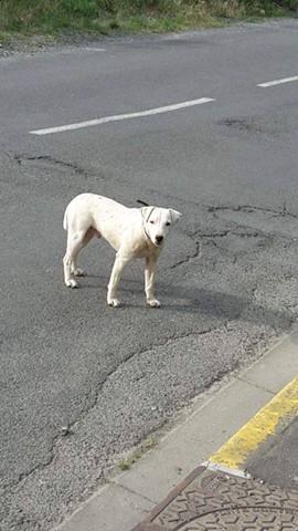 petit chien1.jpg