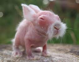 hamster nu.jpg