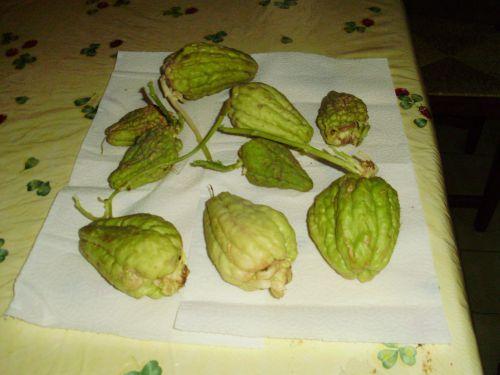 Vente de chayottes germ es pour votre jardin chayotte - Cuisiner les chayottes ...