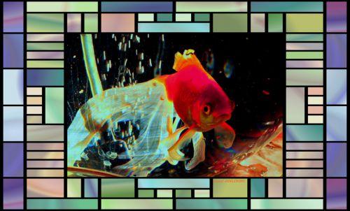 poissons rouge dans bocal  magique  1