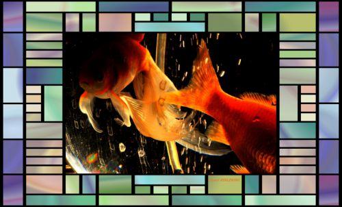 poissons rouge dans bocal  magique  5