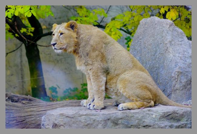 151107gr zoo (4).JPG