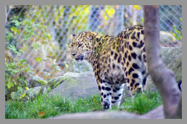 151107gr zoo (7).jpg