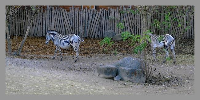 151107gr zoo (17).jpg