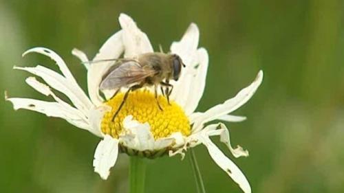 abeille_10.jpg