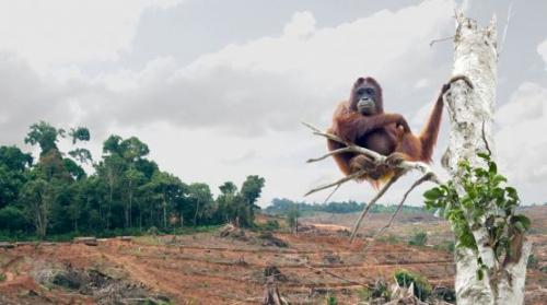 biosprit-subventionen-indonesien.jpg