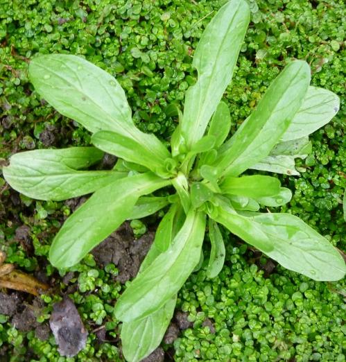 flora 2013 mars 003pmjpg.jpg