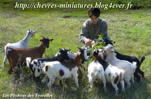 Mes mini chèvres