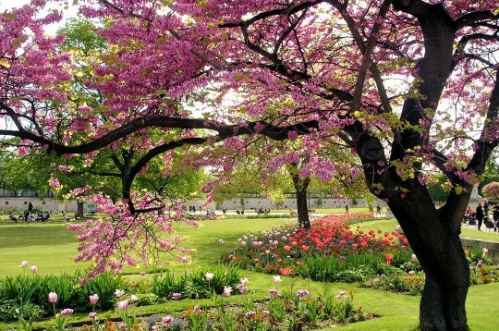 chansons-printemps-.jpg