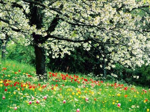 printemps-naturopathie-cure-détox-monodiète.jpg
