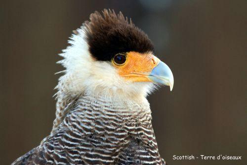 L'aigle de Tenochtitlan