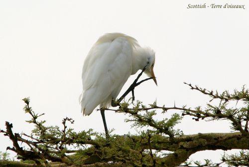 Terre d'oiseaux