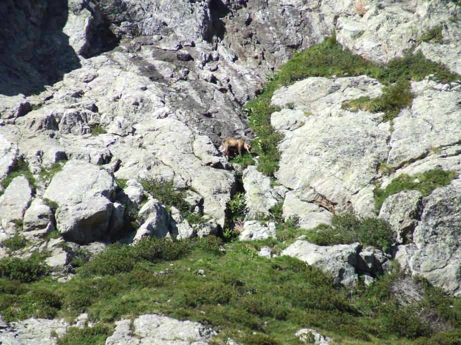 Chamois - Vers le Col de Val Estrèche  - Haute route du Vieux Chaillol - 26.07.07.JPG