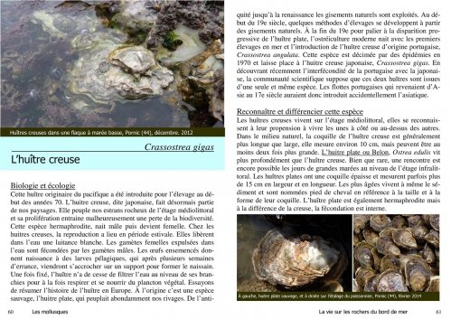 les huîtres.jpg