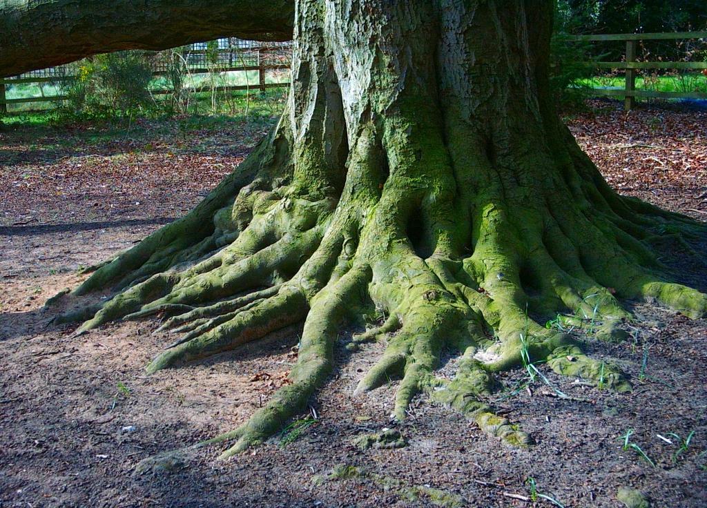 Billetterie rencontres et racines