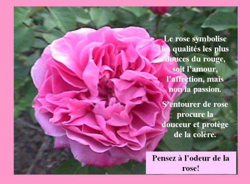 HYMNE DE LA FLEUR dans NATURE artfichier_642714_431785_201201305816673