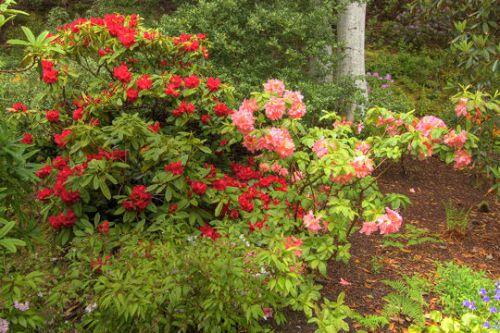 Le jardin d'Inverewe en Ecosse