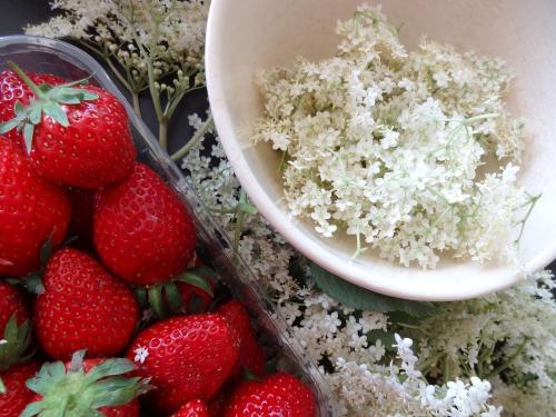 fraises et sureau.JPG
