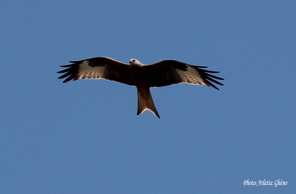IMG_3254_oiseaux.JPG