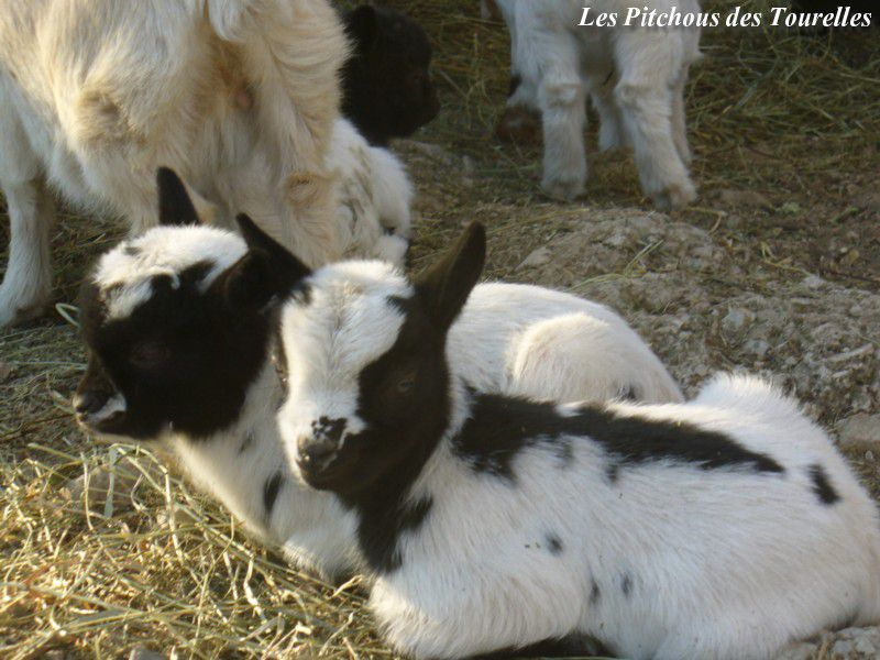 HAPPY - HARMONY - filles Frimousse