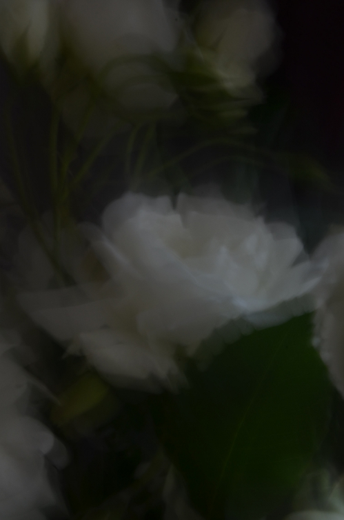 DSC_8572.JPG
