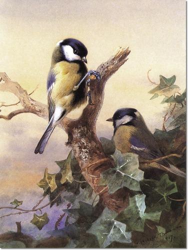 archibald-thorburn-great-tits-1917[1].jpg