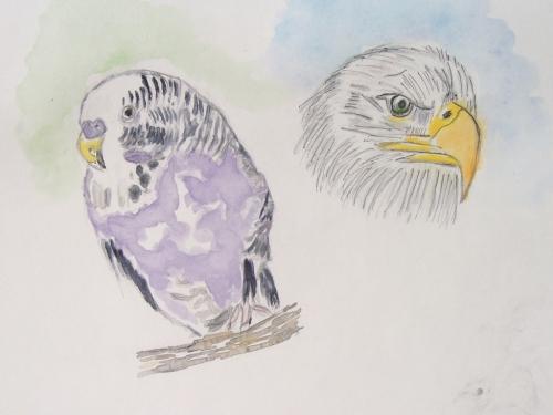 oiseaux cathy.jpg