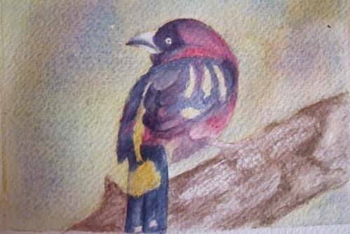 etude 16 oiseau coloré version1.JPG
