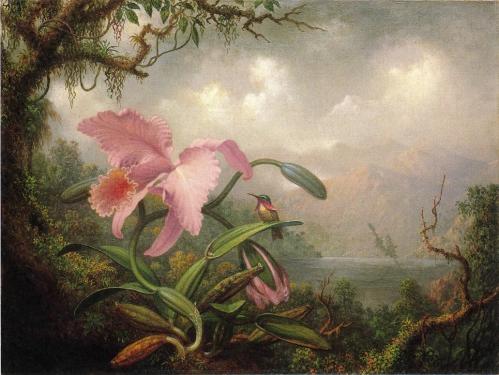 Orchid_and_Hummingbird.jpg