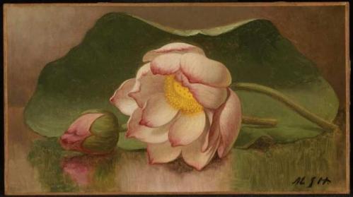Lotus_Blossom_%2F_Water_Lily.jpg