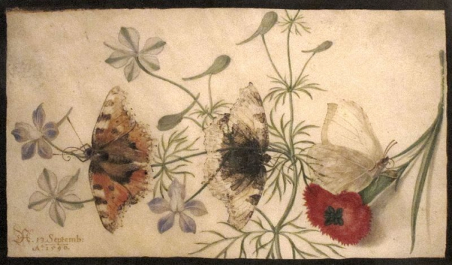 Studies_of_Flowers_and_Butterflies_watercolor_painting_on_parchment_by_Joris_Hoefnagel_Flanders_1590_HAA.JPG