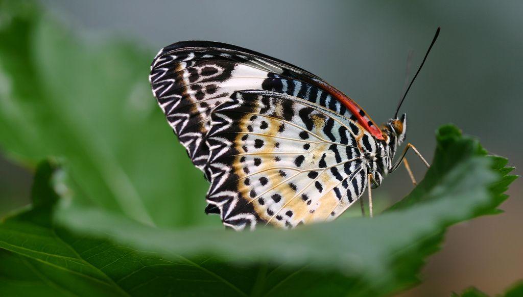 fa67ff630c_papillon-flickr.jpg