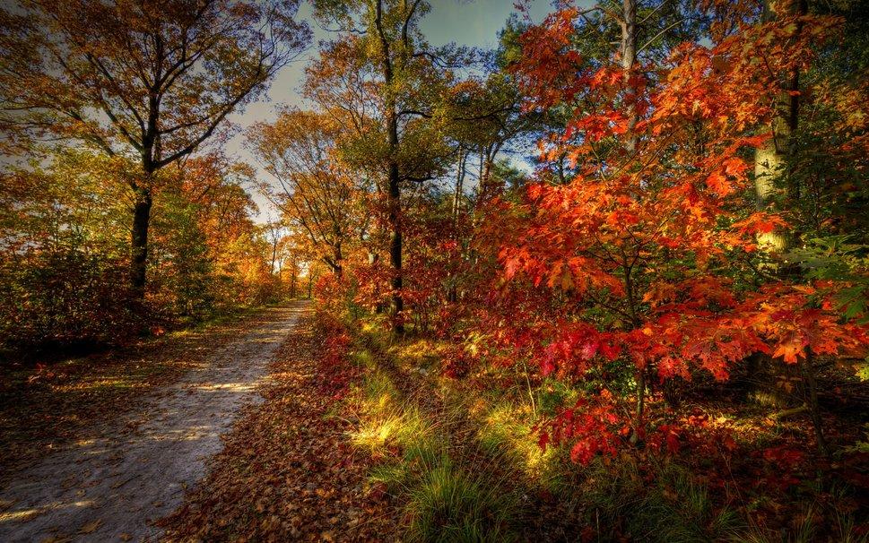 113481__nature-landscape-sky-autumn-road-forest-trees_p.jpg