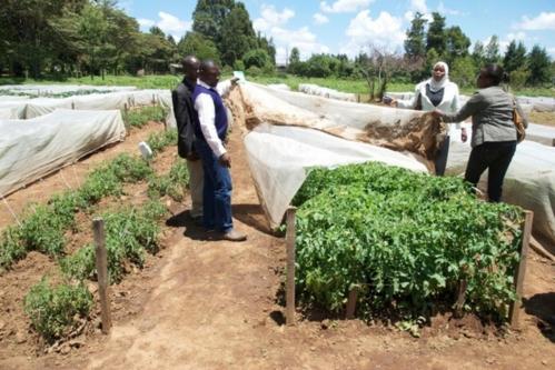 De-nouveaux-filets-anti-insectes-adaptes-a-l-agriculture-subsaharienne_article_popin.jpg