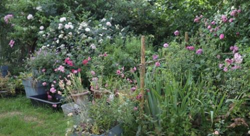 jardin du bas 05-07 1.jpg